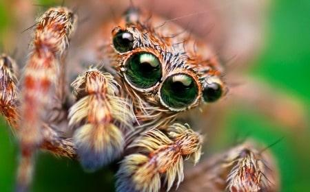 soñar-con-arañas-10