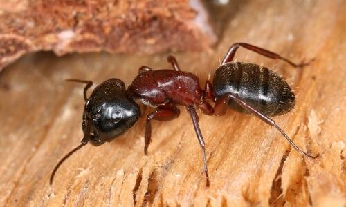 las-hormigas-60