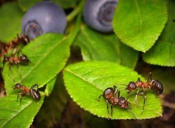 las-hormigas-31