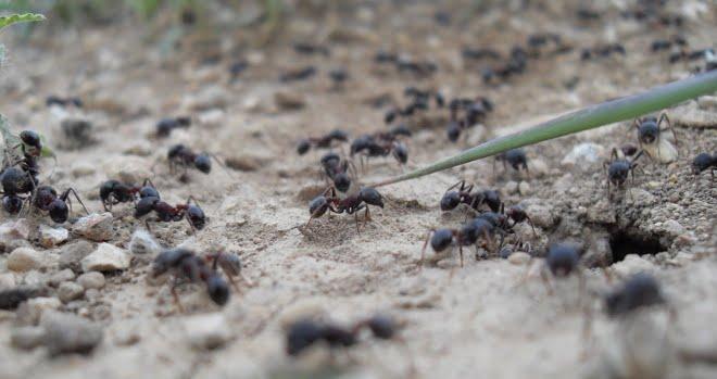 las-hormigas-28