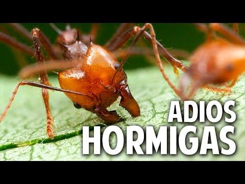 Las hormigas c mo acabar con las hormigas eficazmente - Como terminar con las hormigas en casa ...