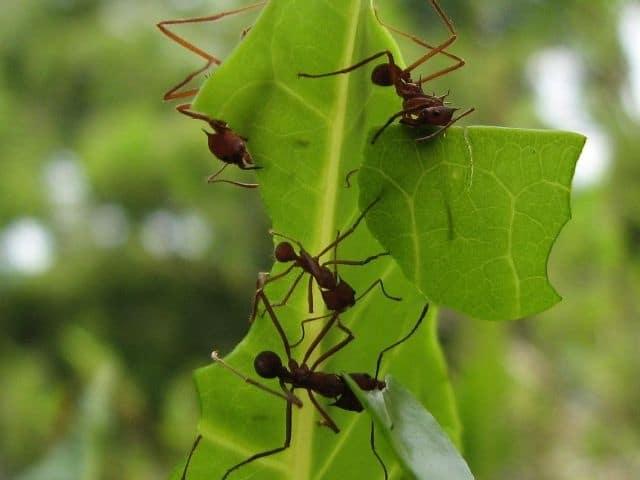 las-hormigas-63