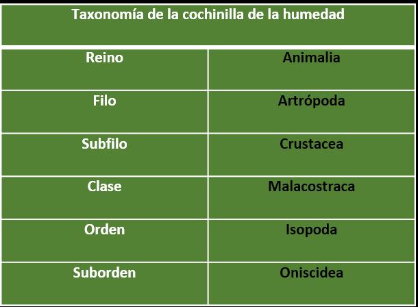 Taxonomía de la cochinilla de la humedad