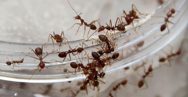 las-hormigas-11