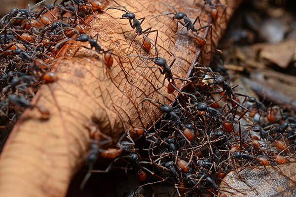 las-hormigas-67