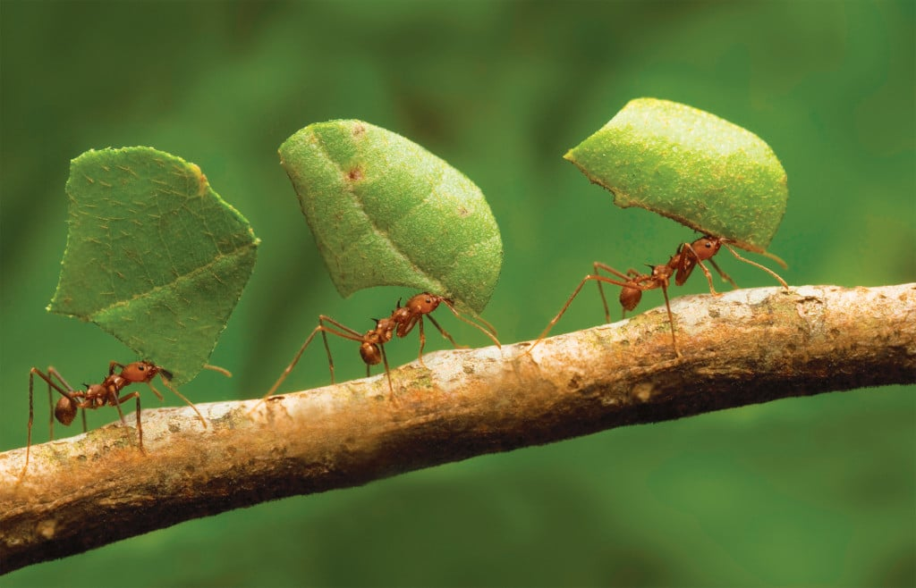 las-hormigas-68