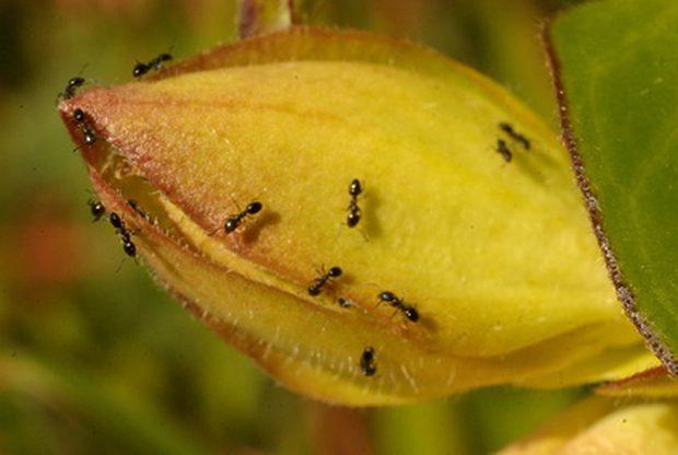 las-hormigas-25