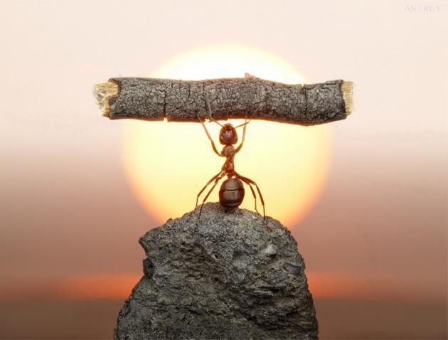 las-hormigas-65