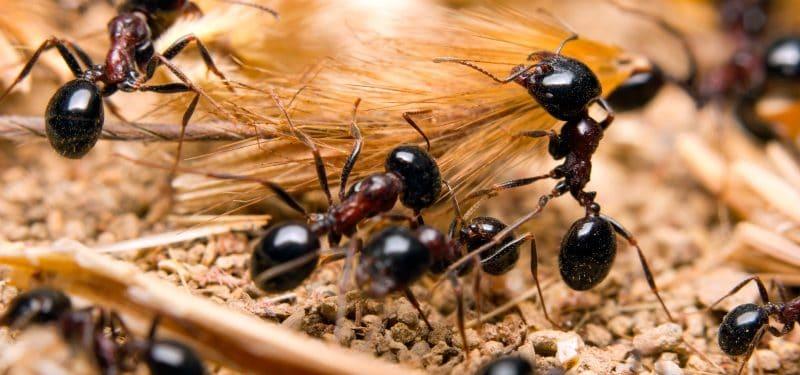 las-hormigas-2