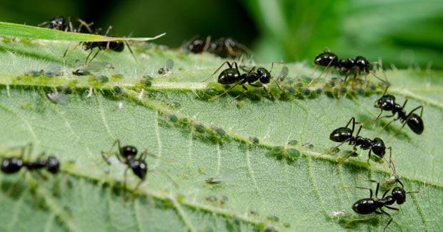 las-hormigas-24