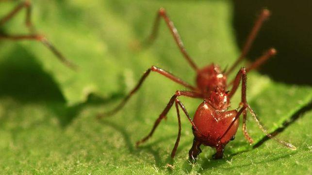 las-hormigas-57