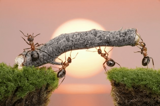 las-hormigas-70