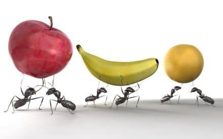las-hormigas-45