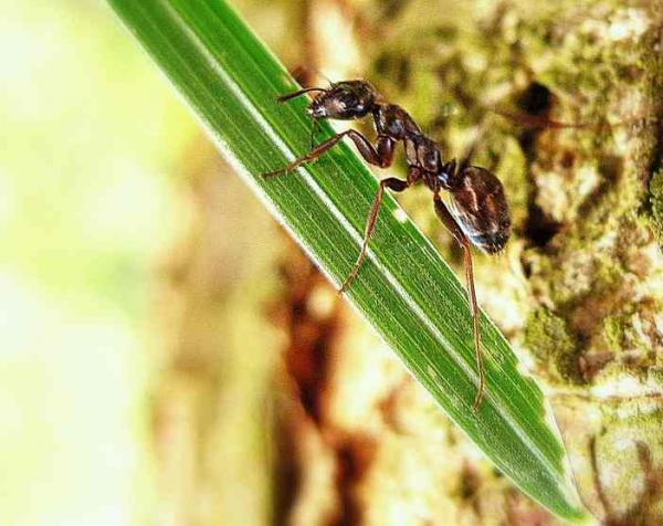 las-hormigas-71