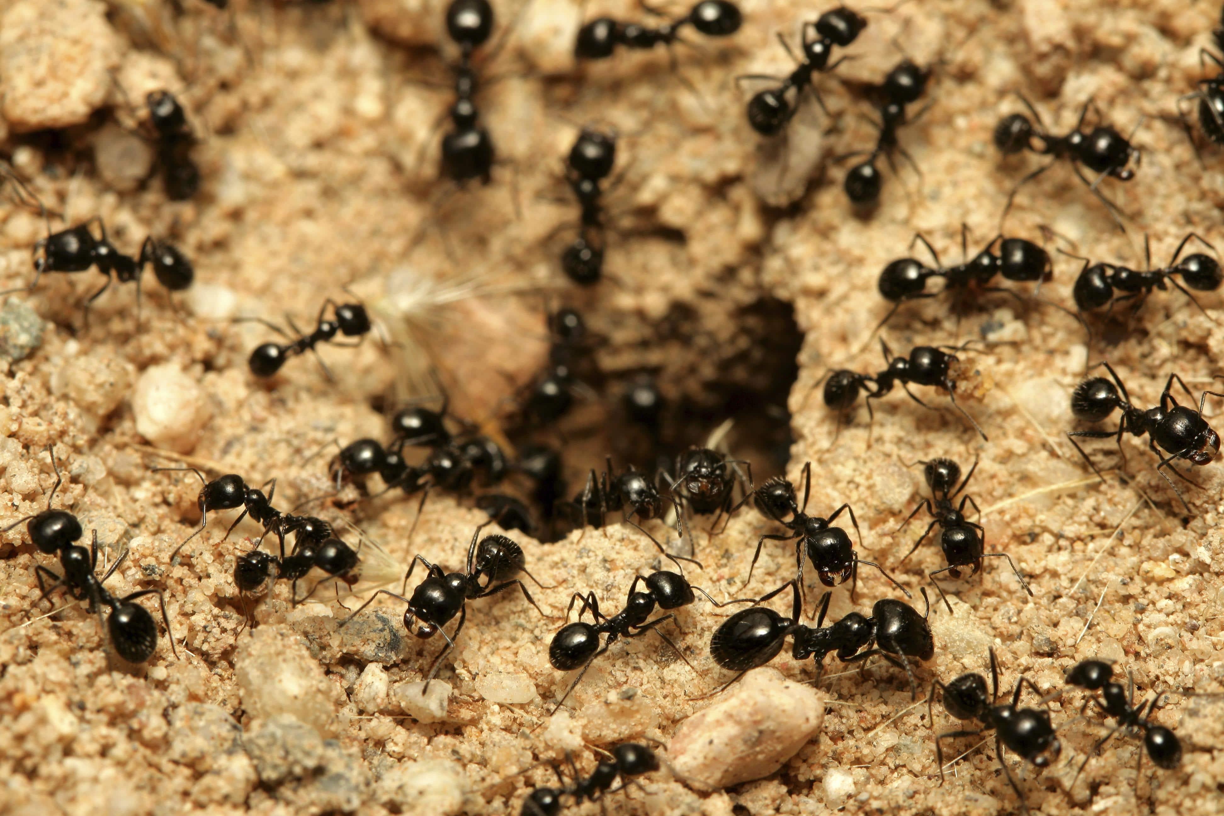 las-hormigas-66