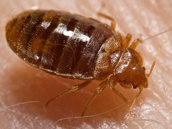 picadura-de-insectos-14