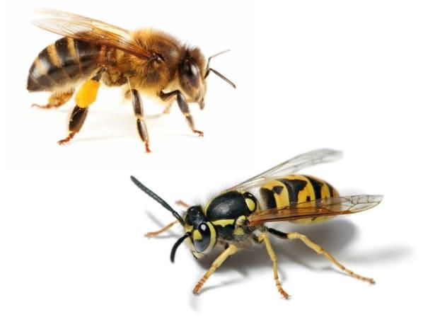 picadura-de-insectos-17