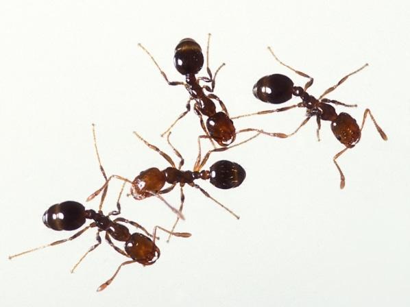 picadura-de-insectos-19