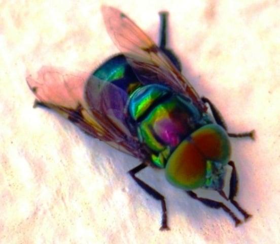 picadura-de-insectos-21