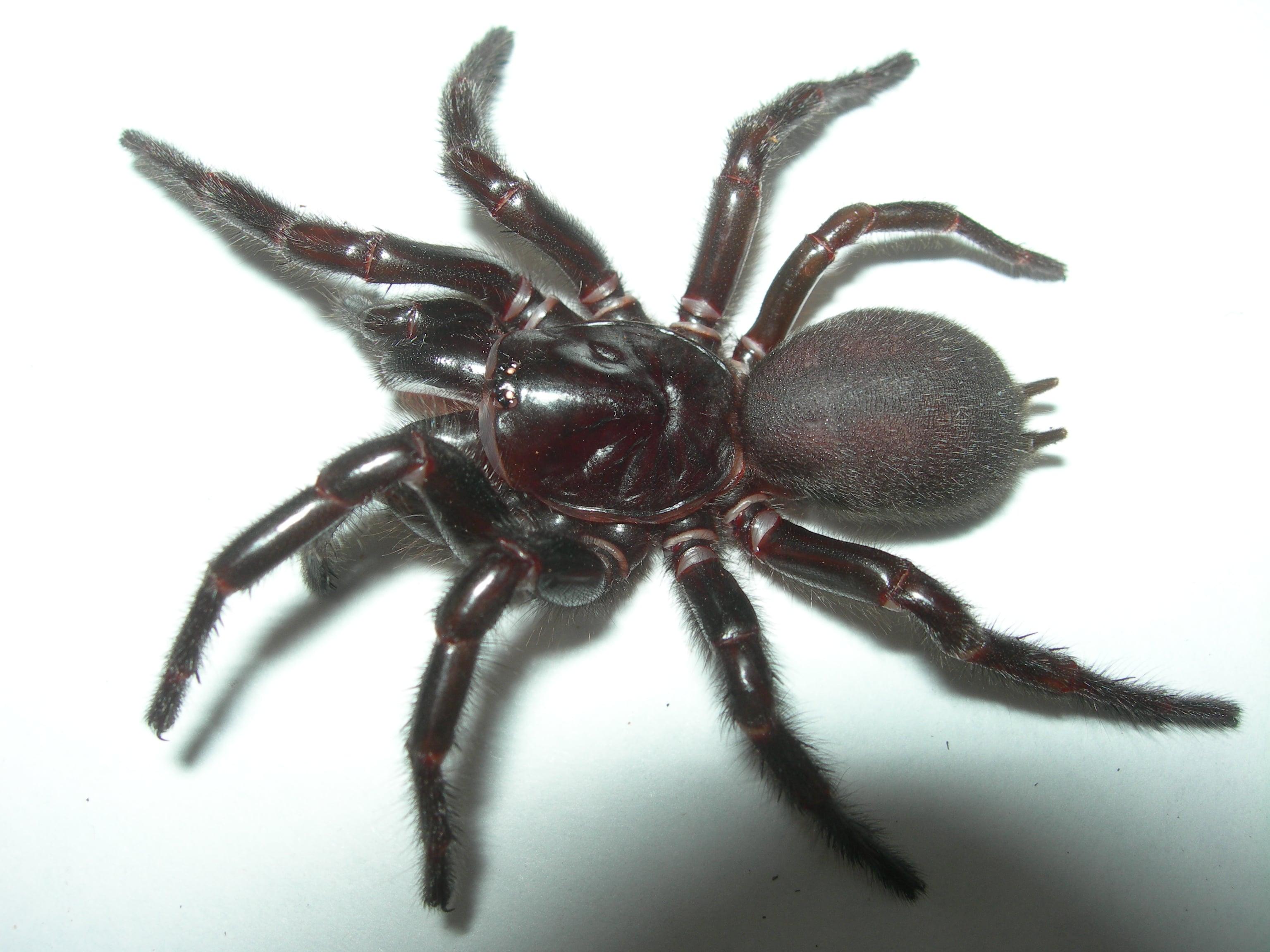 picaduras-de-arañas-13