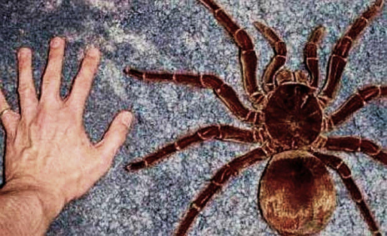 picaduras-de-arañas-30
