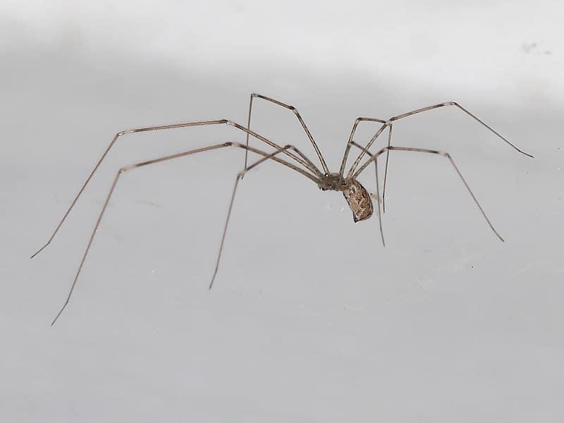 picaduras-de-arañas-9