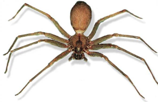 picaduras-de-arañas-10