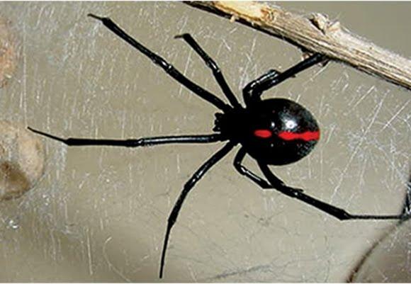 picaduras-de-arañas-8