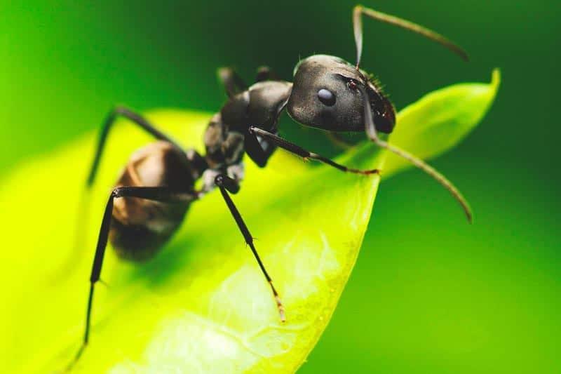 las-hormigas-6