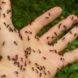 las-hormigas-26