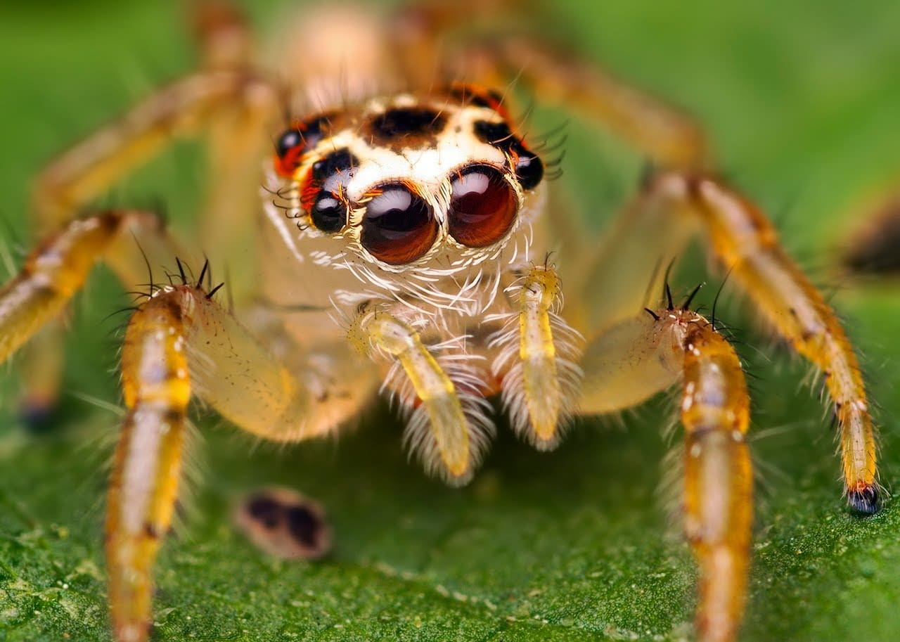 soñar-con-arañas-24