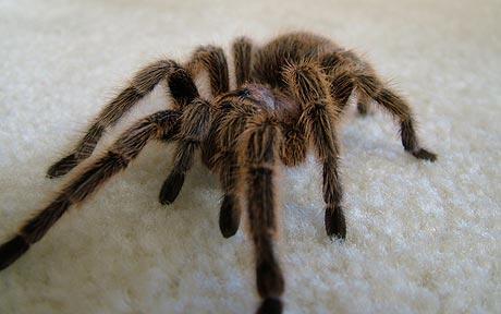soñar-con-arañas-33