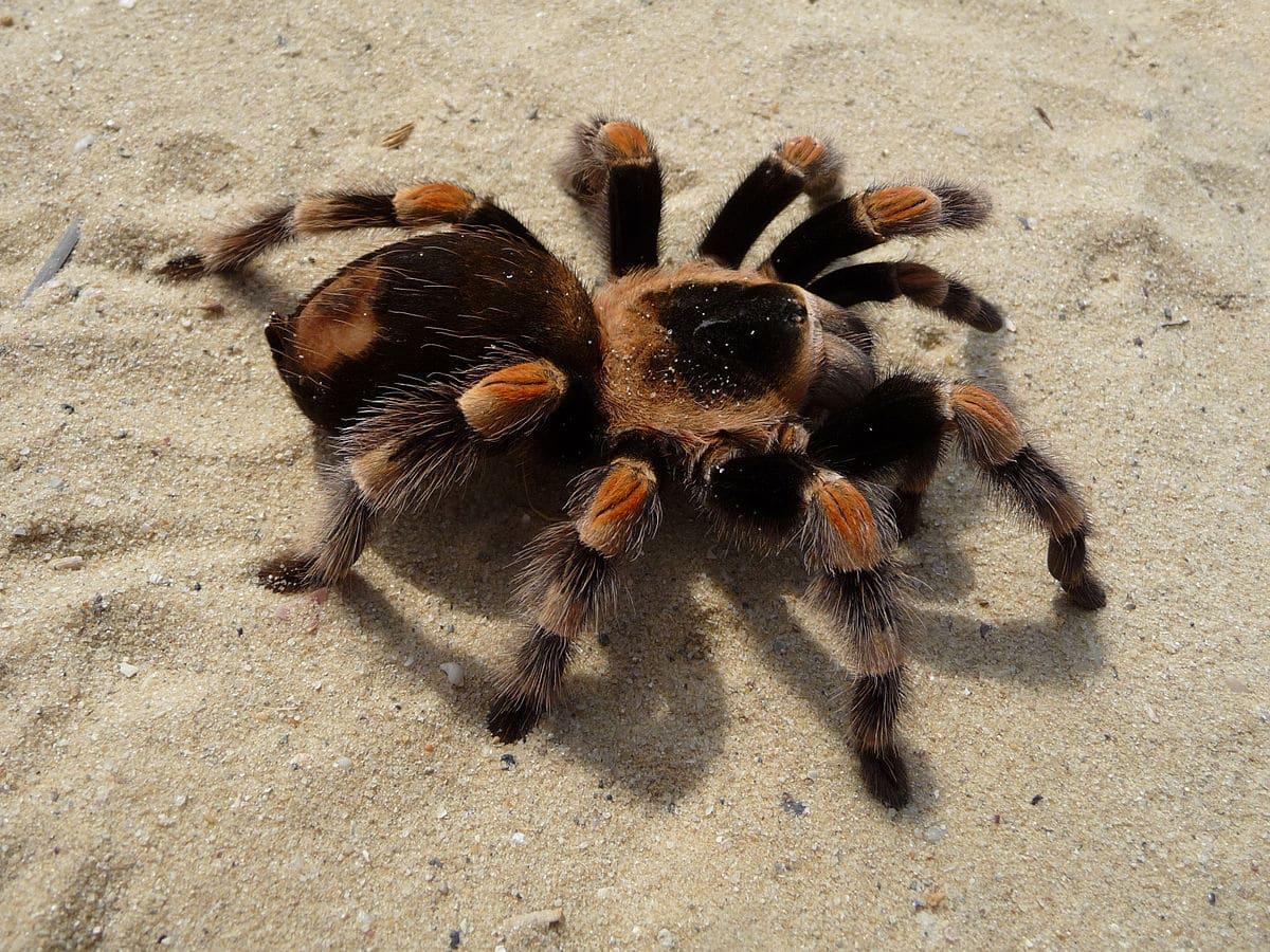 soñar-con-arañas-34