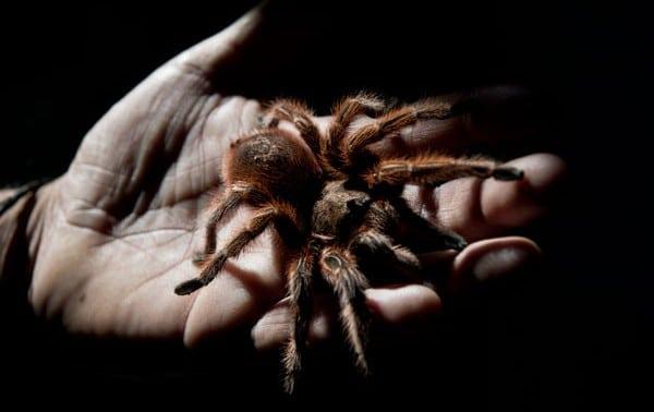 soñar-con-arañas-5
