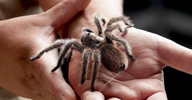 soñar-con-arañas-8