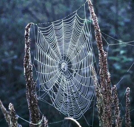 soñar-con-arañas-2