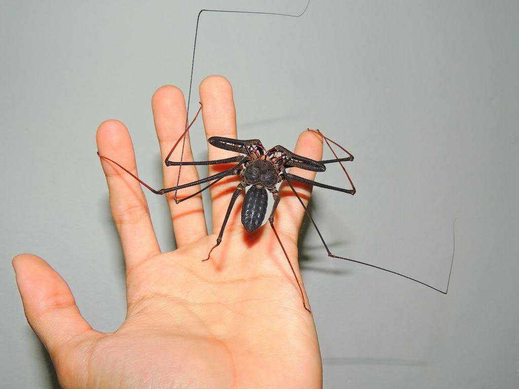 soñar-con-arañas-29
