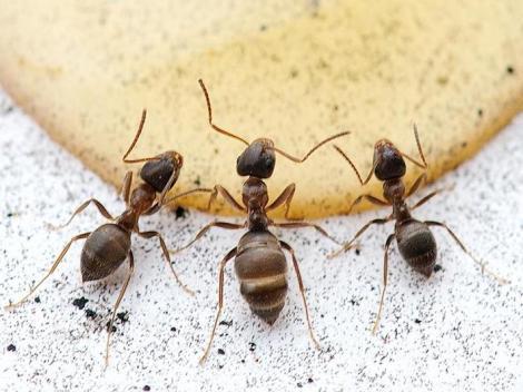 Matar hormigas en casa simple especial hormigas - Eliminar hormigas cocina ...