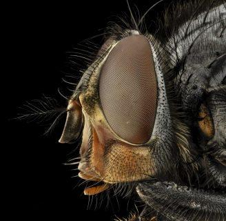 Insectos: características, clasificación, metamorfosis, y mucho más