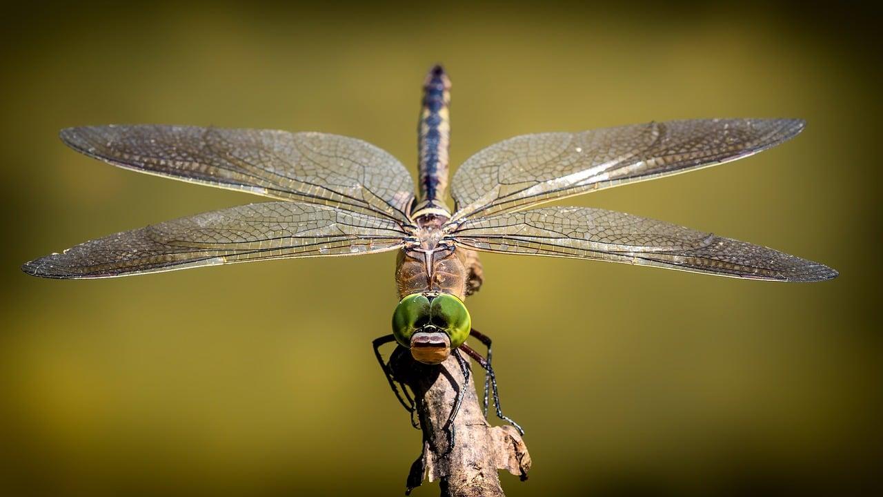 insecto y mas