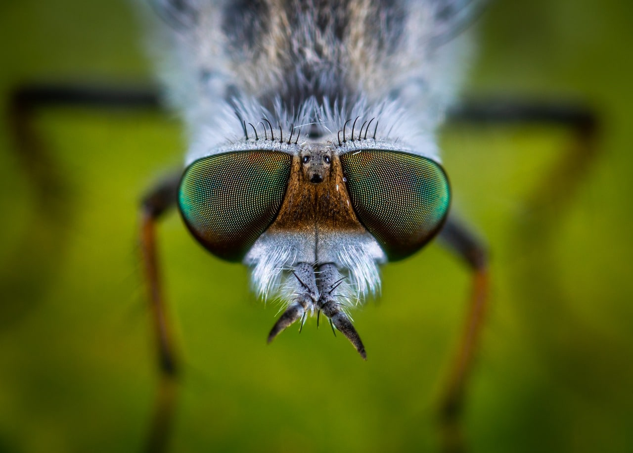 insectos y mas