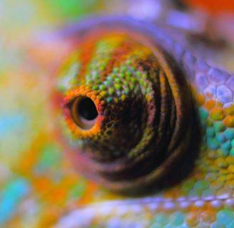 Reptiles: ¿Qué son? , características, reproducción, hábitat,  y mucho más