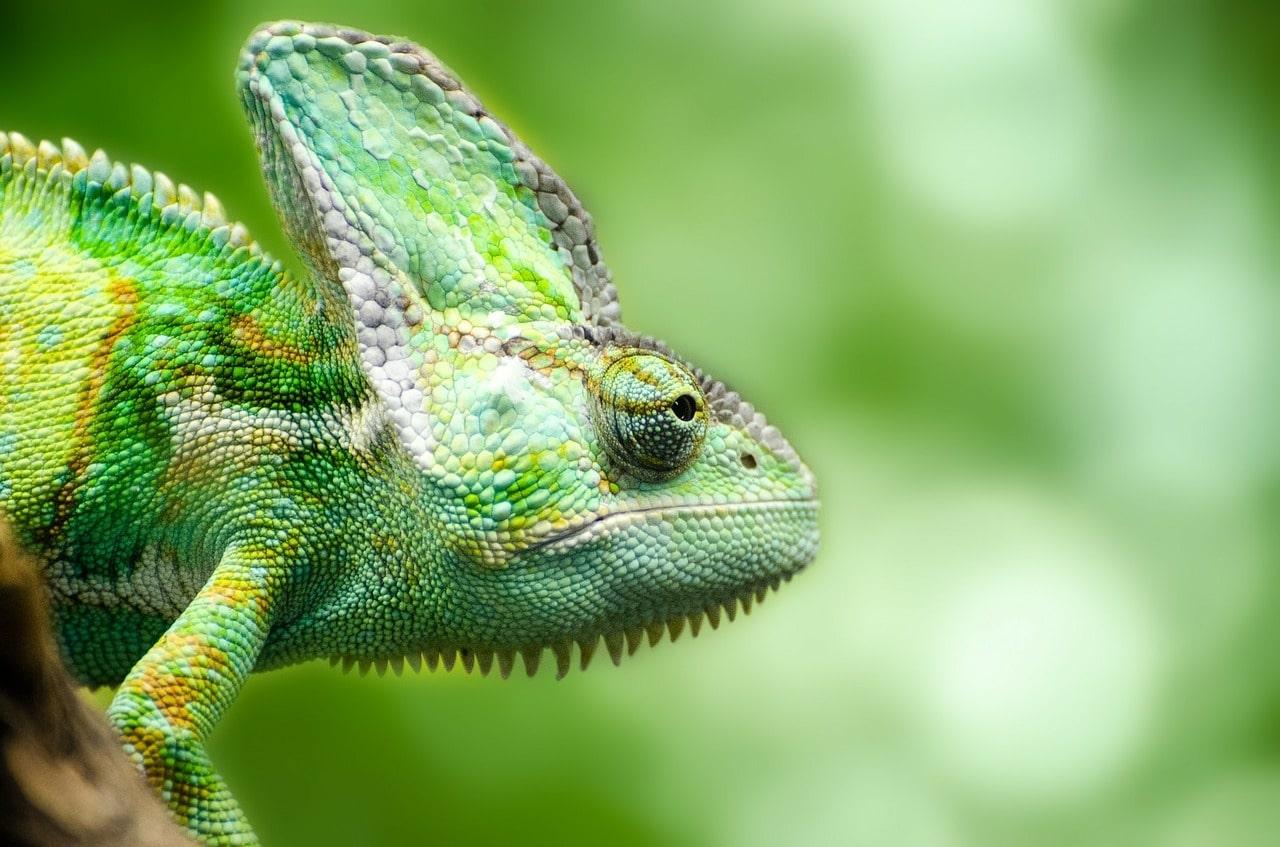 Reptiles: ¿Qué son ? , características, reproducción, hábitat, y ...