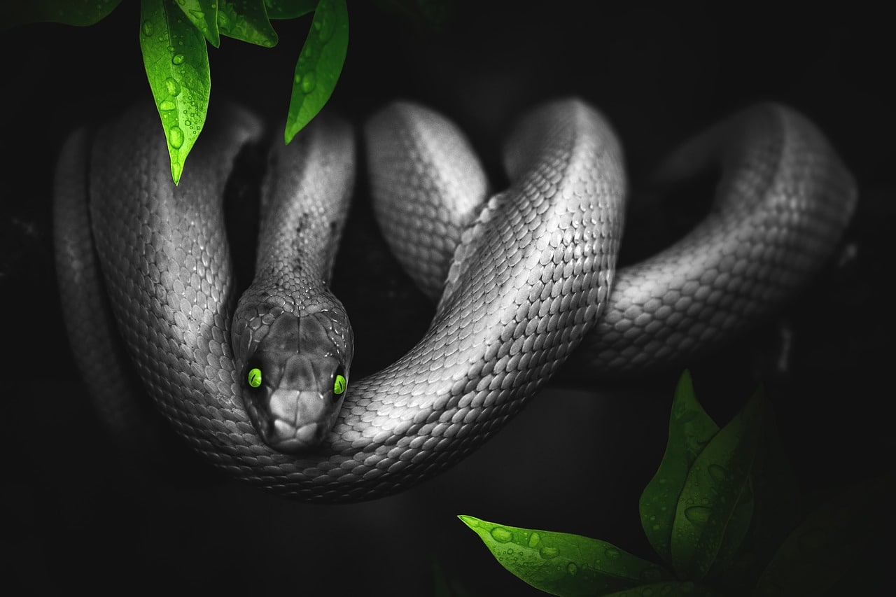 reptiles y mas