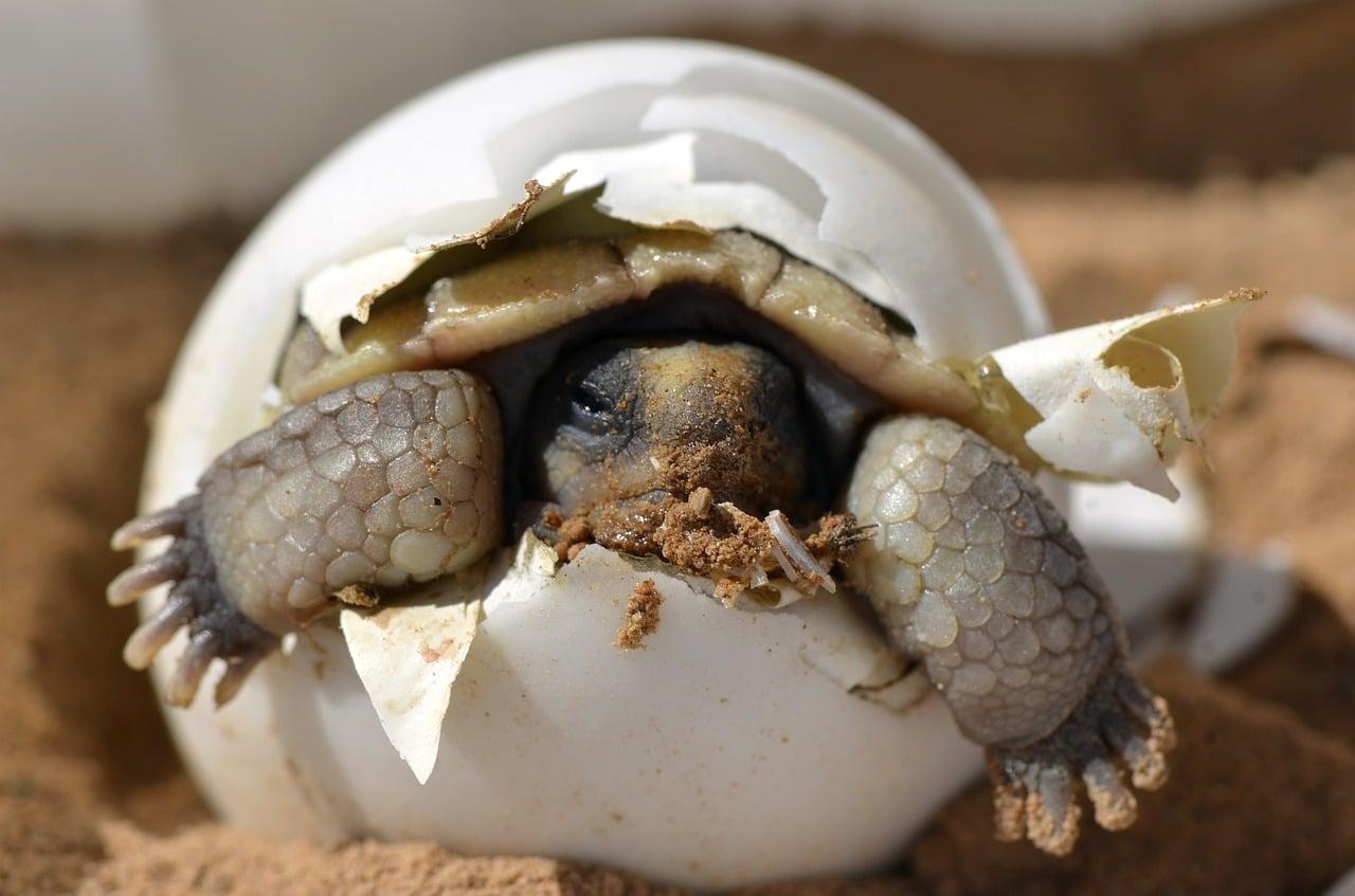 las tortugas y mas